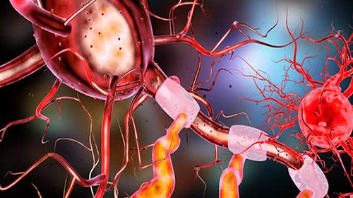 neuronnes